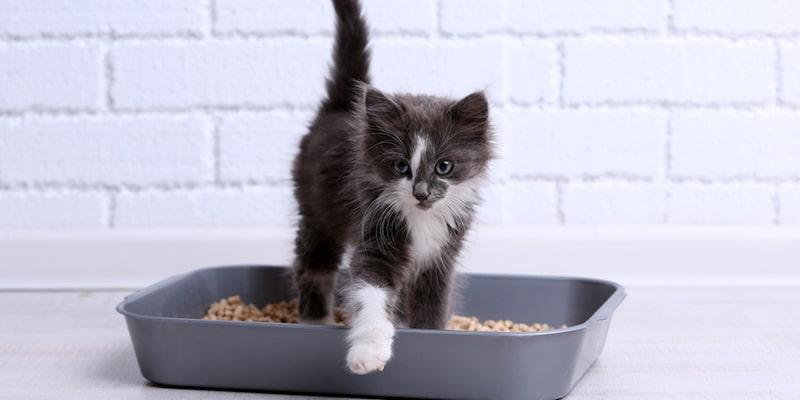 Indoor toileting problems in cats
