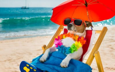 Does my pet need Sunscreen?